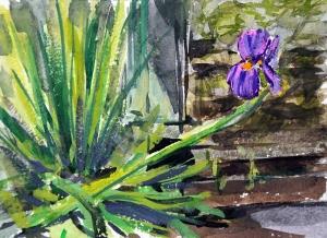 Garden Iris Small